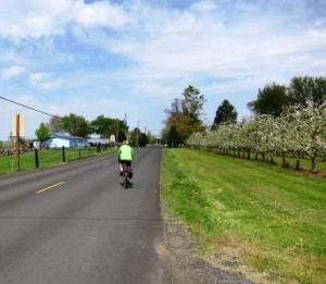 Pedaling past orchards on Old Milton Hwy.