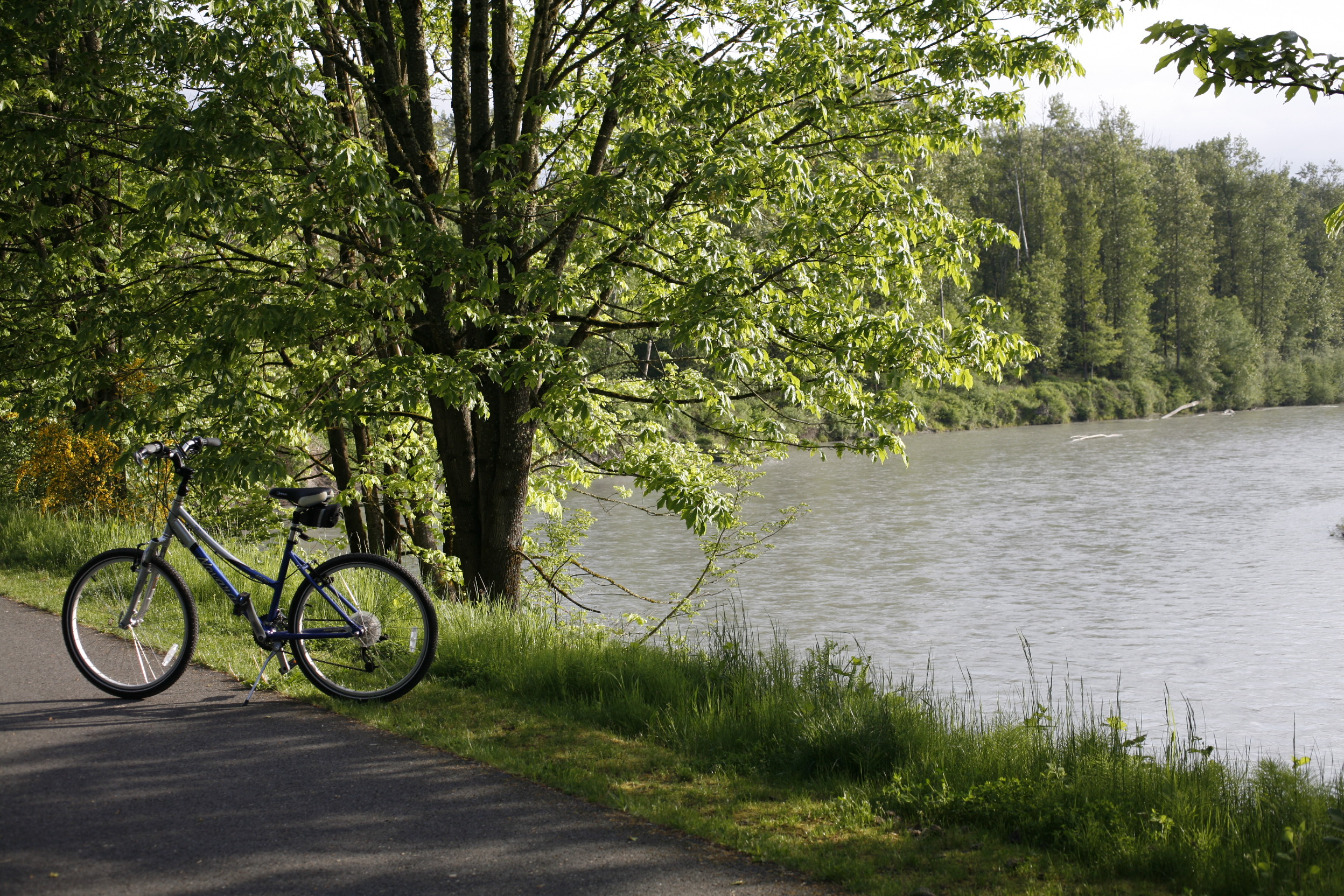 Snohomish bikes the centennial trailwashington bikes debora nelson publicscrutiny Choice Image