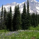 Mount Rainier Bike and Hike: Indian Henry's Hunting Ground