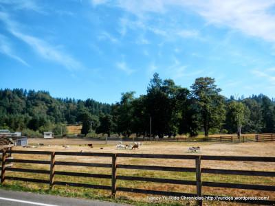 yu-greenriver-auburn-horses