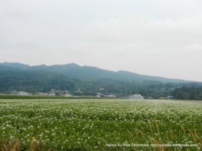 mtvernon-rolling-hills