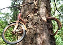 Famous-Bike-in-Tree-Vashon-Island-WA
