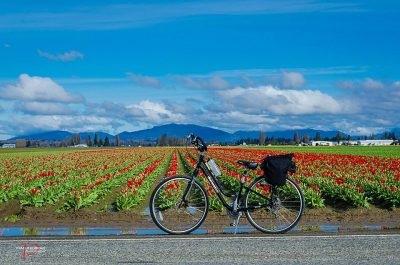 skagit_bike_tulip_festival-pic-by-Pam-Headridge-from-Visit-Skagit-Valley