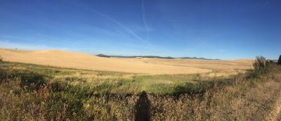 Image by @RodHuntress shared on Twitter. Palouse panorama at harvest time, seen from the John Wayne Pioneer Trail. Shot between the ID border and Tekoa, WA.